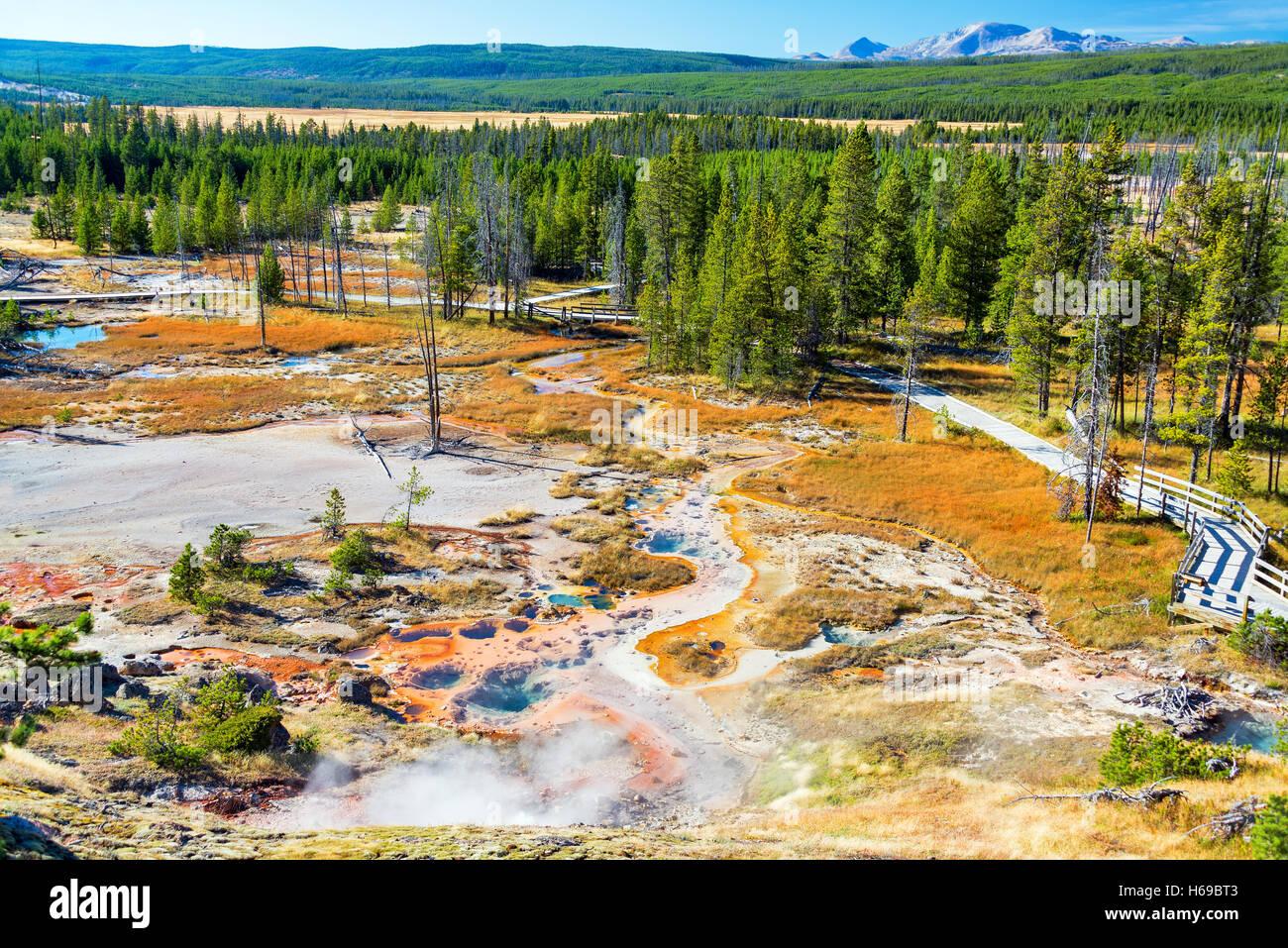 Vue paysage de Norris Geyser Basin dans le Parc National de Yellowstone Banque D'Images