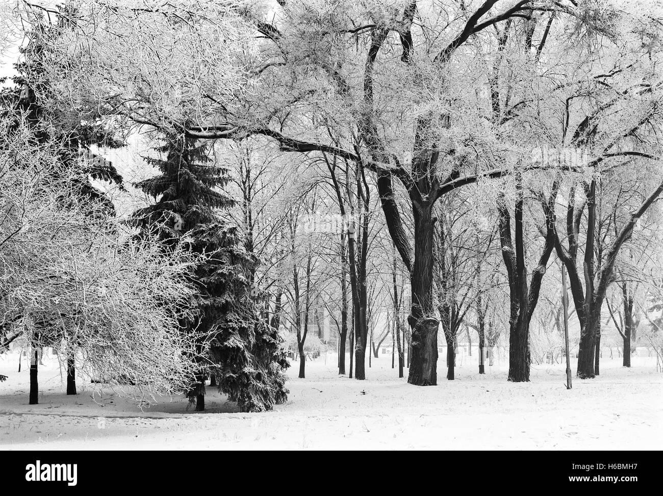 Ville d'hiver parc avec arbres snowbound; film monochrome numérisée Photo Stock