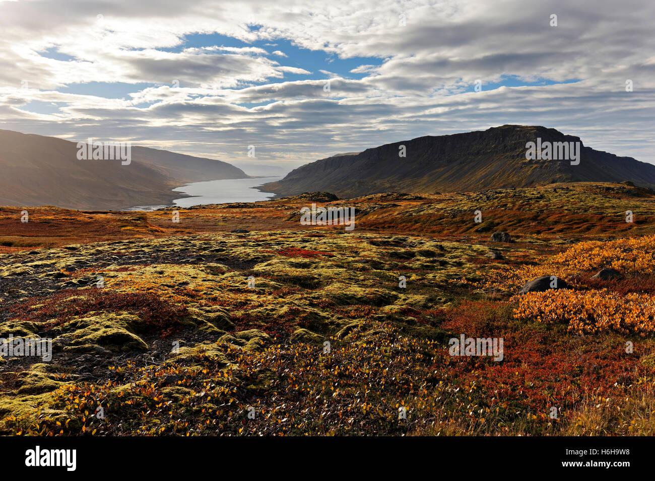 Paysage de fjord, Westfjords, l'Islande, de l'Atlantique Nord, Europe Photo Stock