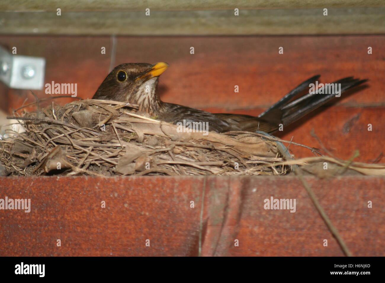 oiseaux Banque D'Images