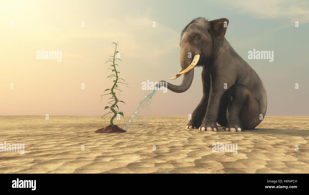 arrosage de l'éléphant d'un haricot magique avec sa trompe sur un