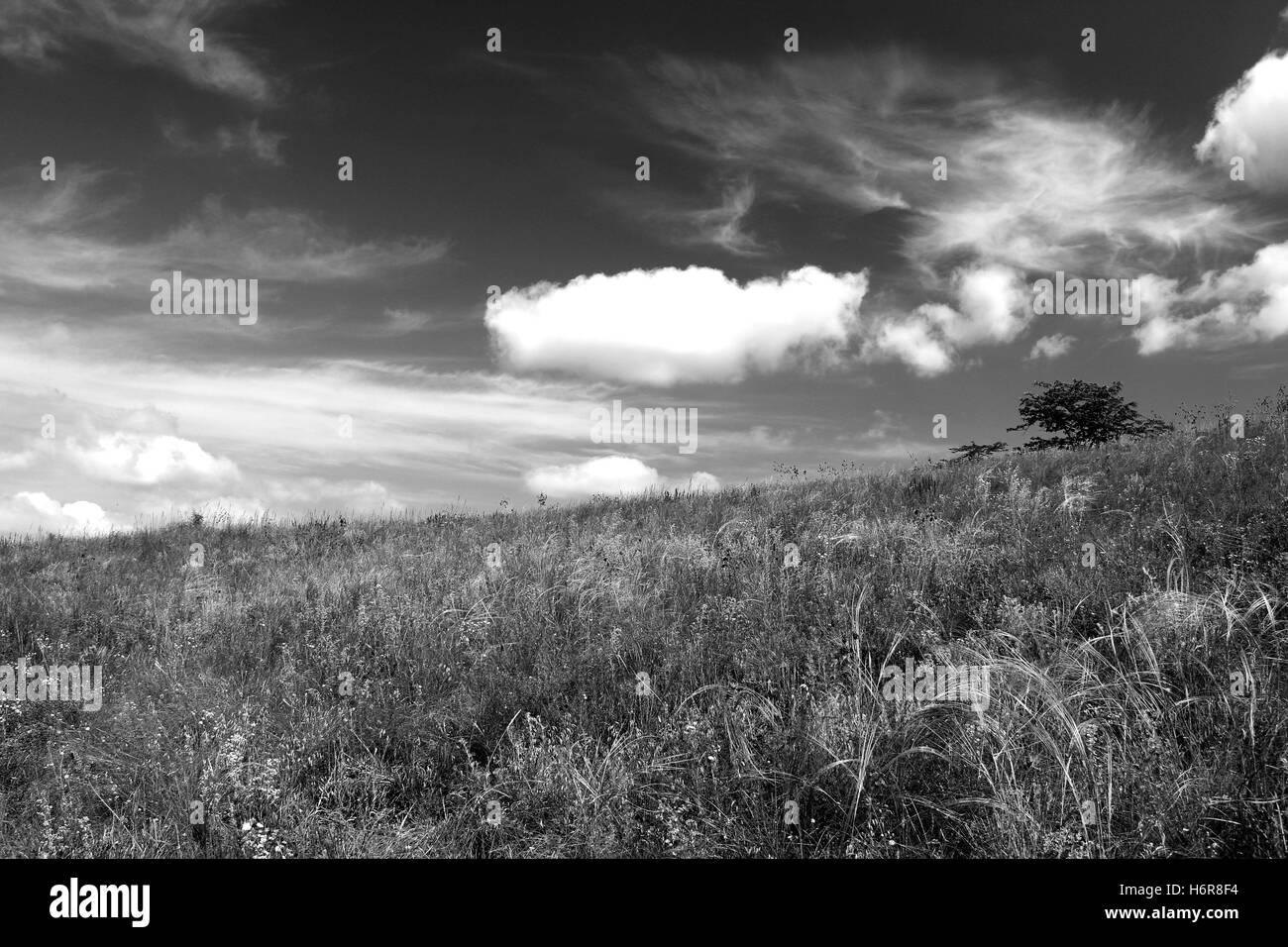Ciel monochrome. Banque D'Images