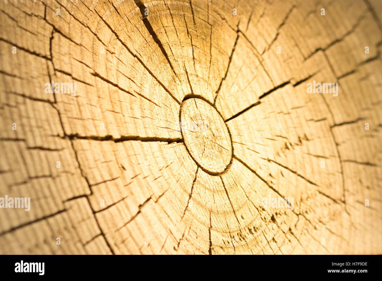 Section de bois au milieu fissuré Photo Stock