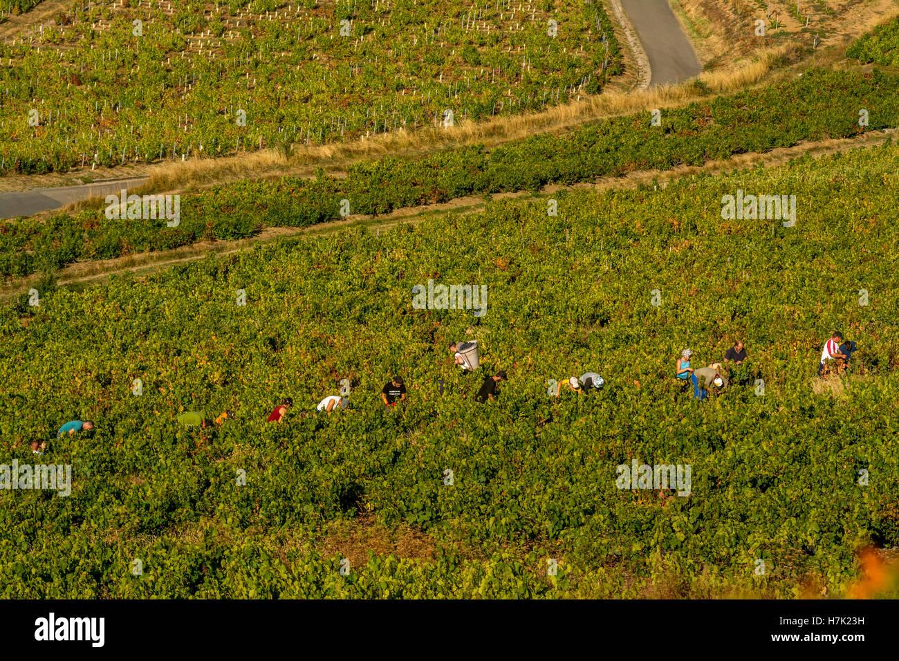 Beaujolais, viticulture et vendangeurs Photo Stock