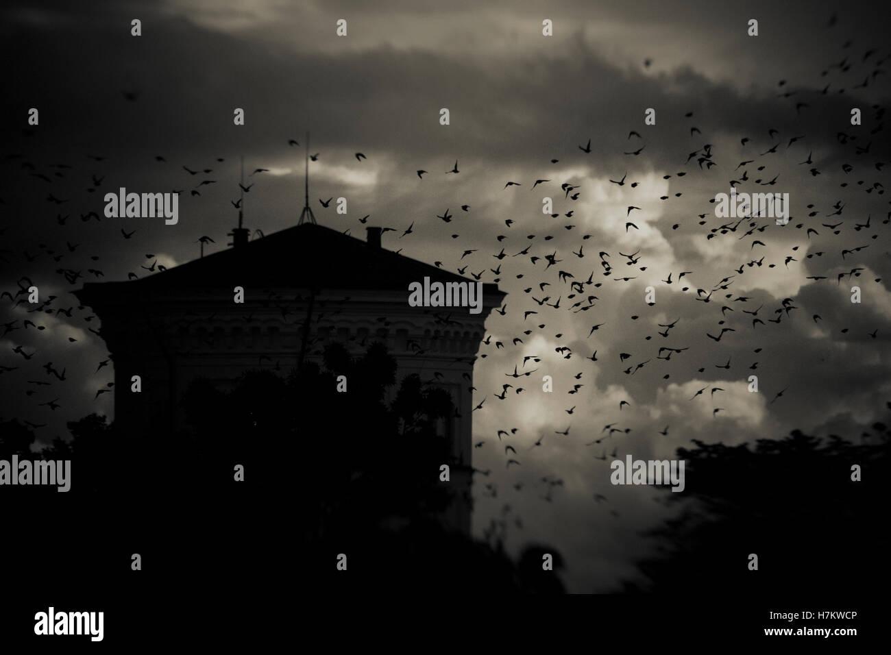Flock of birds flying passé building at night avec les nuages de tempête dans l'arrière-plan. Moody, sombre et effrayant Banque D'Images