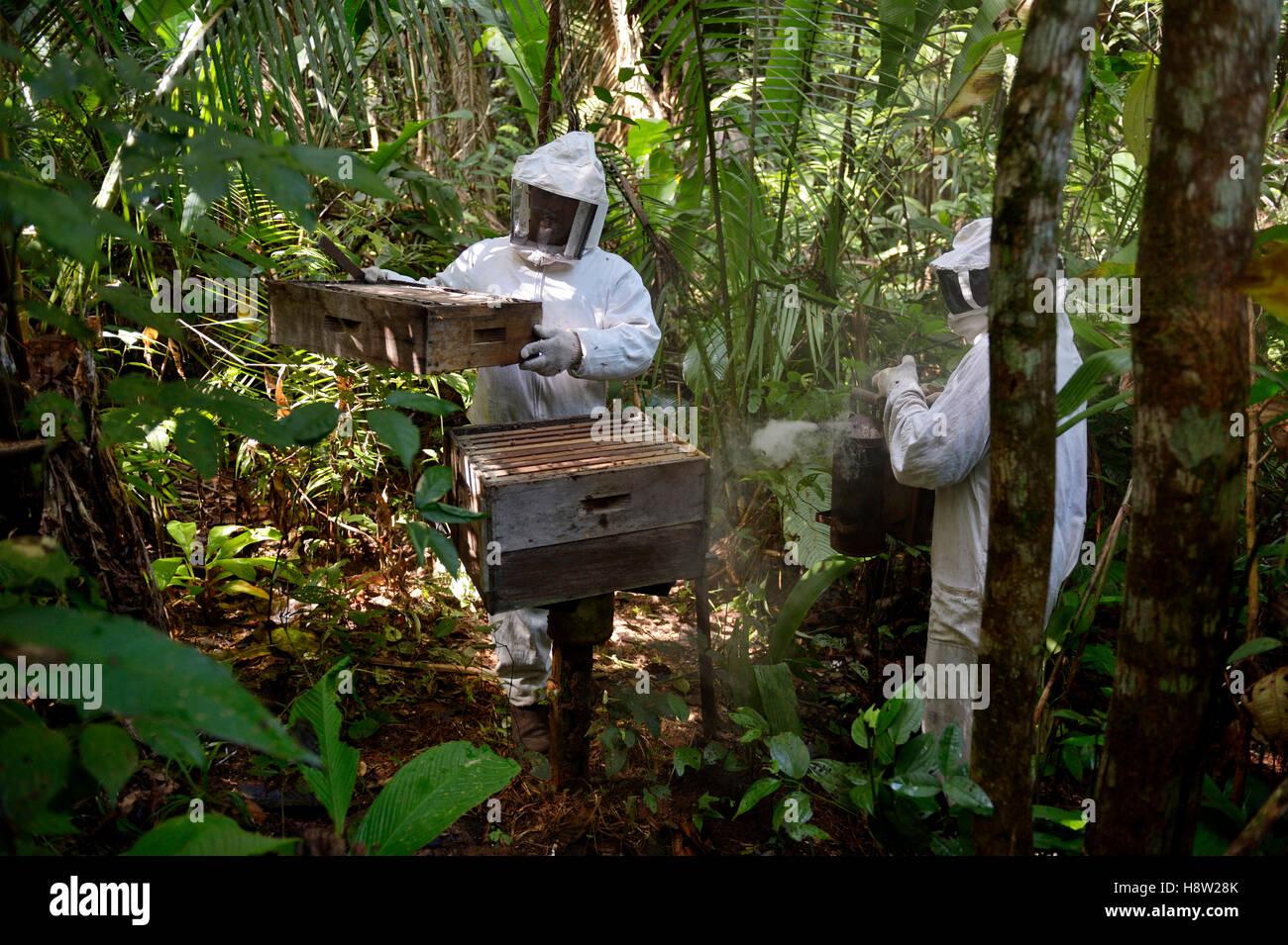 Les apiculteurs avec deux ruches dans la forêt amazonienne, l'abeille domestique (Apis mellifera), Asentamento Areia, Banque D'Images