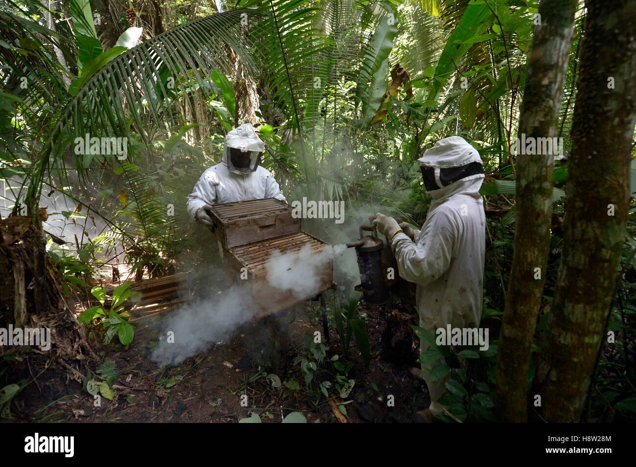 Les apiculteurs avec deux ruches dans la forêt amazonienne, abeille à miel (Apis mellifera), Asentamento Areia, Banque D'Images