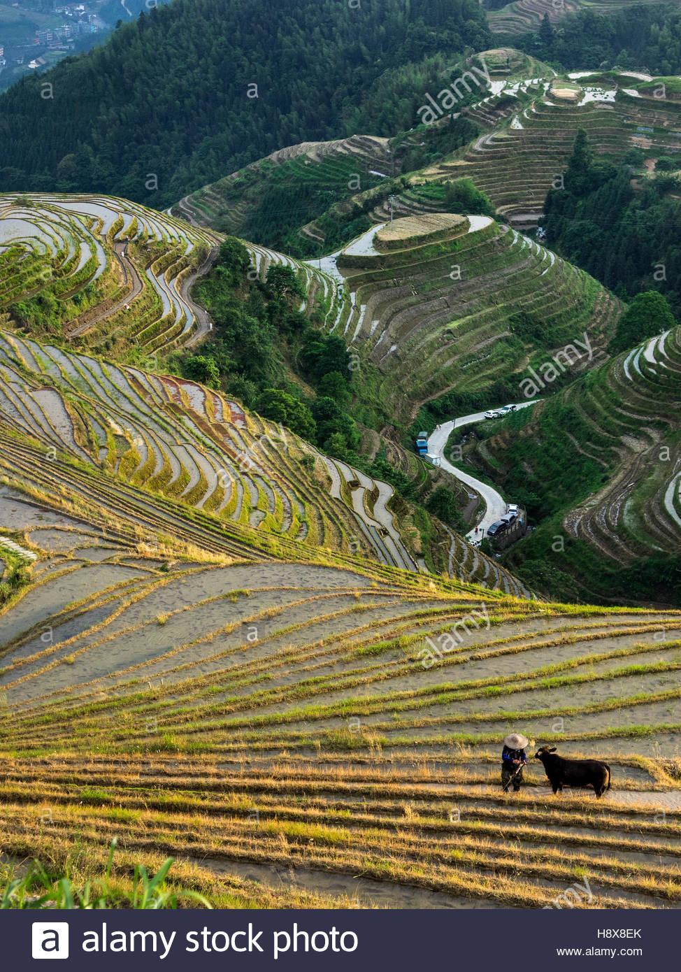 Les rizières en terrasses dans la région de Ping'an, village de la province de Guangxi Longsheng du Photo Stock