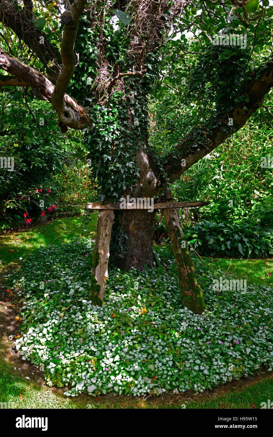 Arbre soutenu l'appui soutenu de l'aide soutenir aider vieux arbres endommagés faibles debout empêchent Photo Stock