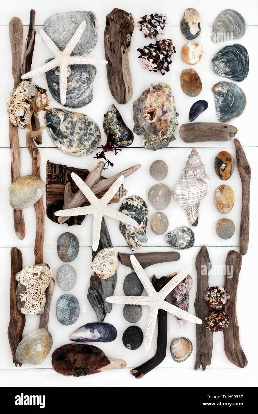 coquillage, bois flotté, rock et les algues des objets naturels de