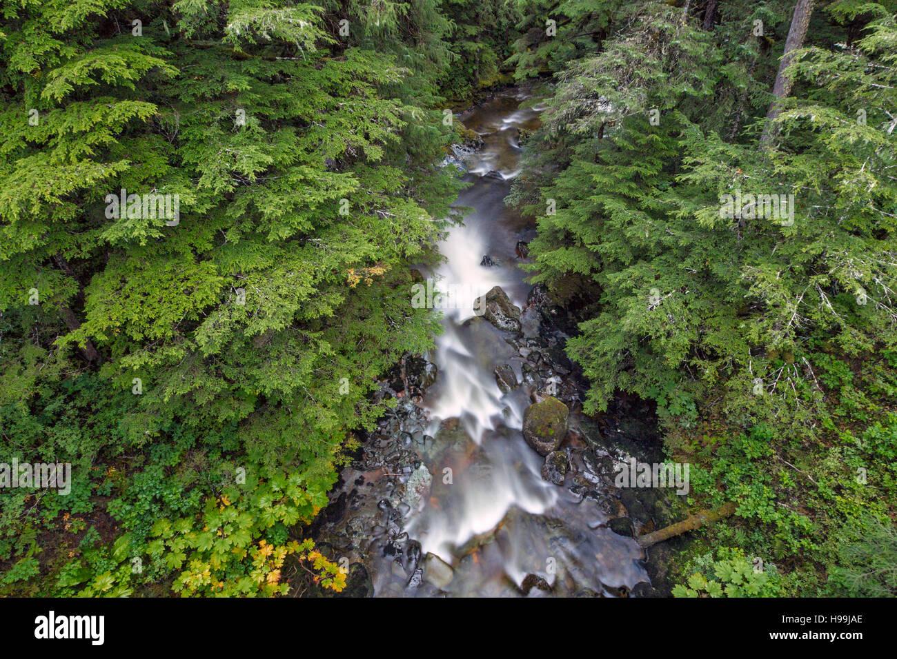 Une rivière de la forêt tropicale côtière tempérée, la Forêt Nationale Tongass, Photo Stock