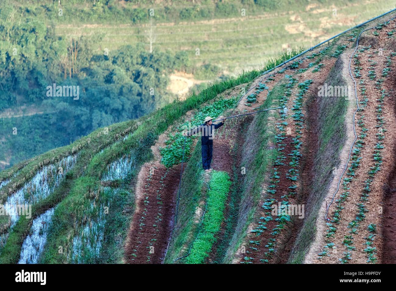 Terrasses de riz, Lao Chai, SAPA, Vietnam, Asie Photo Stock