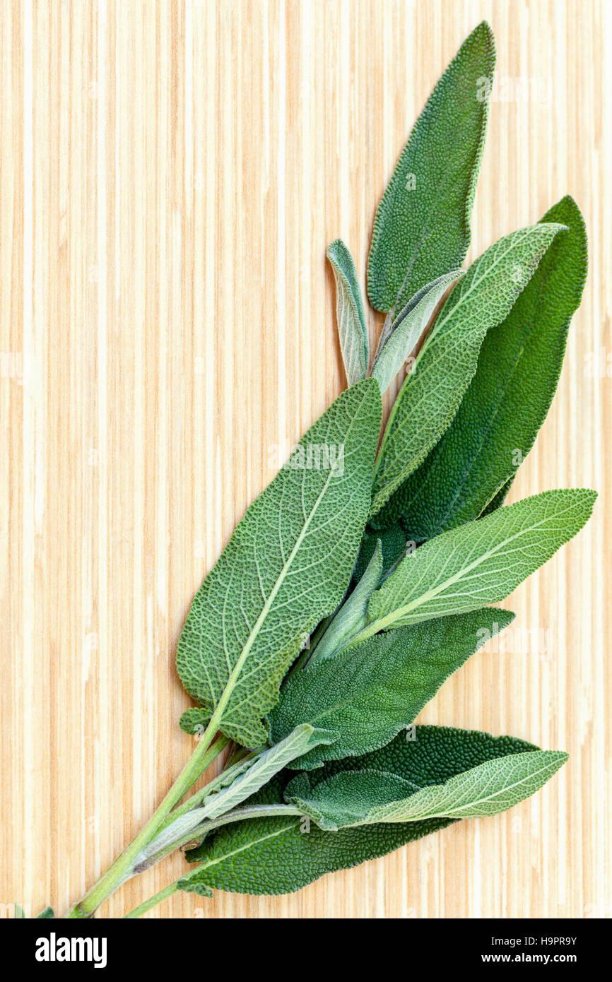 D'autres plantes médicinales méditerranéenne Salvia officinalis ou Photo Stock
