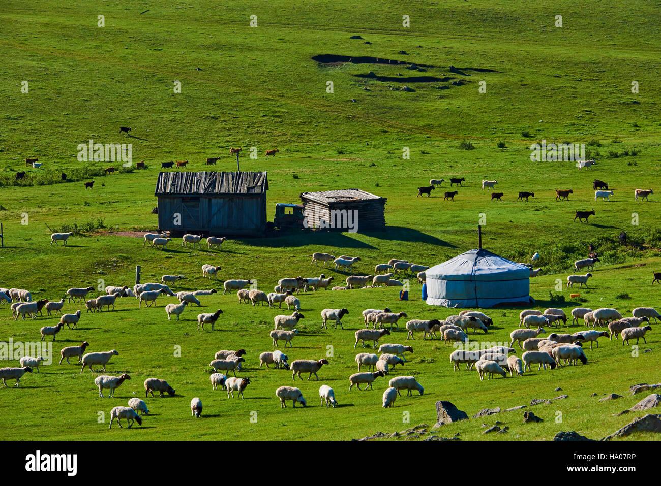 La Mongolie, province Övörkhangaï, vallée de l'Orkhon, camp nomade, la yourte Photo Stock