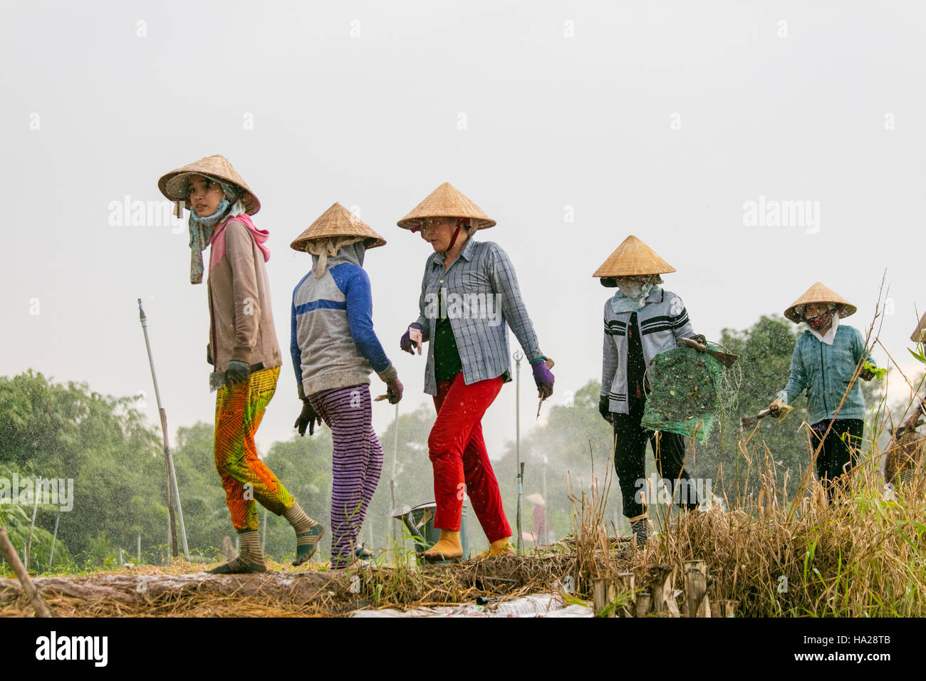 Ma Un Hung, village agricole, Mekong, Vietnam, Asie Photo Stock