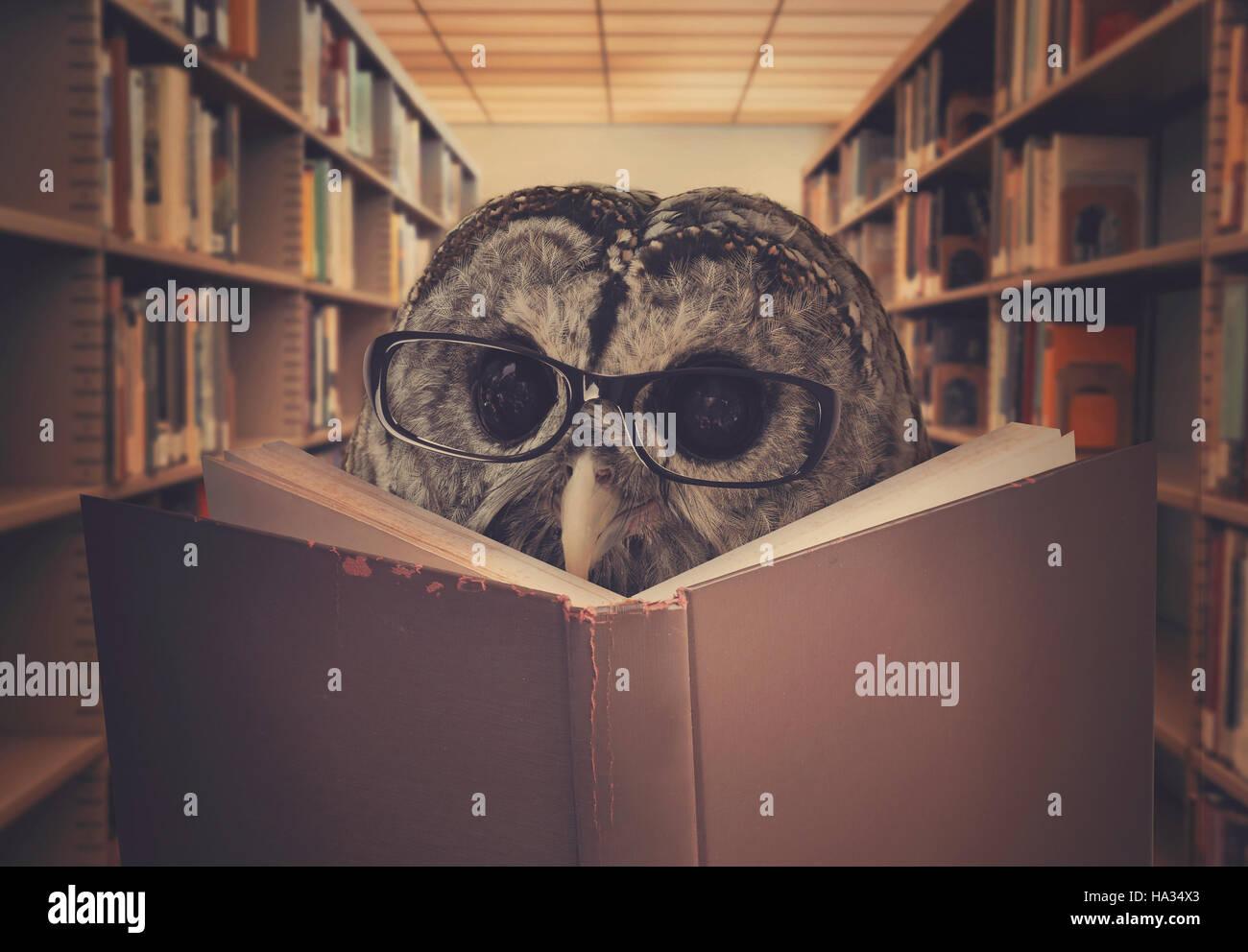 Un hibou oiseau est le port de lunettes et la lecture d'un livre de bibliothèque pour l'éducation, la créativité ou l'apprentissage concept. Banque D'Images