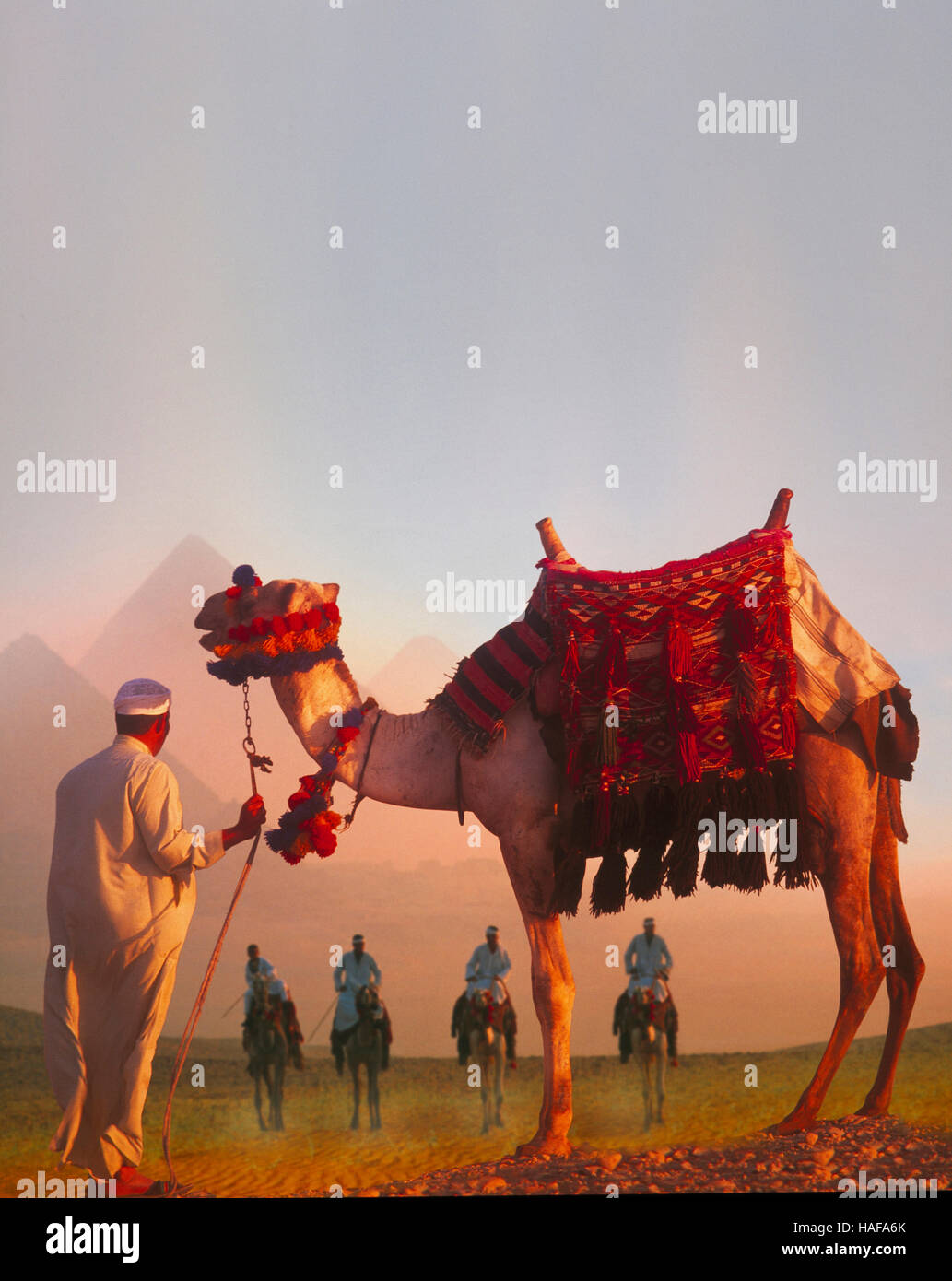 Les chameaux et pyramides à l'aube, Giza, Le Caire, Egypte Photo Stock
