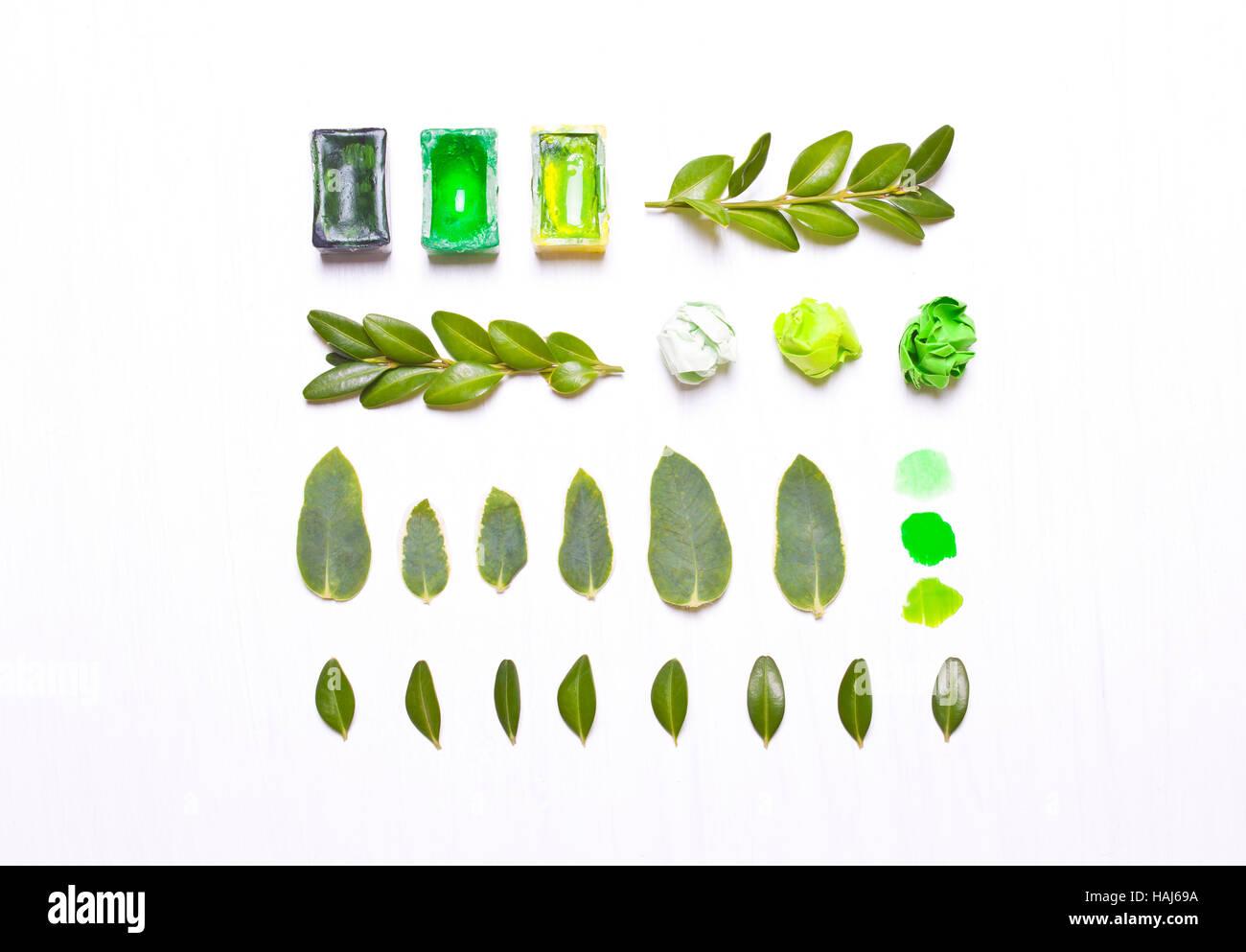 Les peintures, feuilles vertes dans une rangée. L'art conceptuel, en milieu de table designer.Télévision lay, overhead view.Type télévision, vue du dessus Banque D'Images