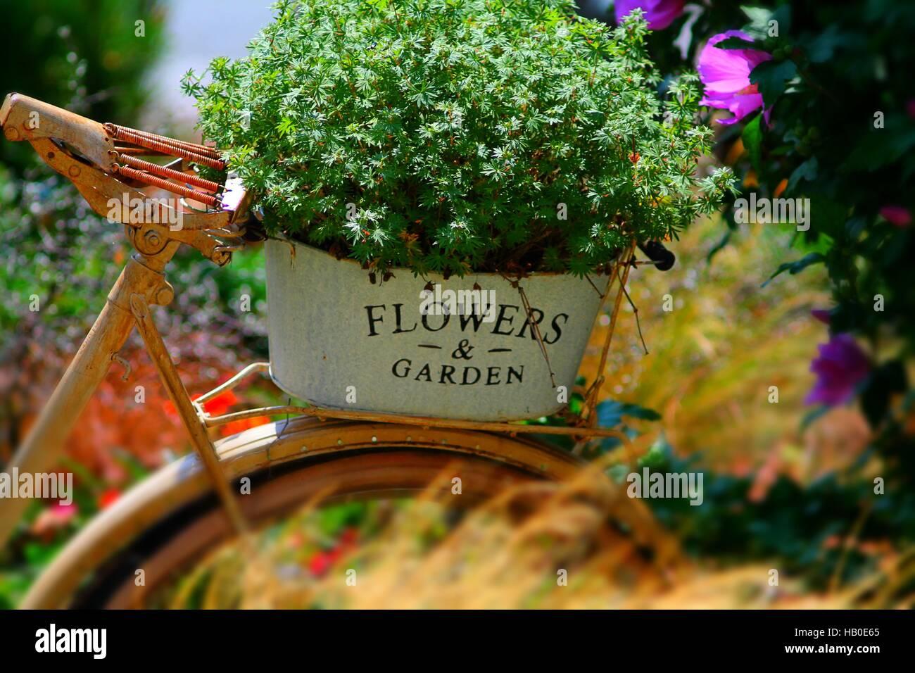 Jardin de fleurs d\'été avec de vieux vélos rouillés ...