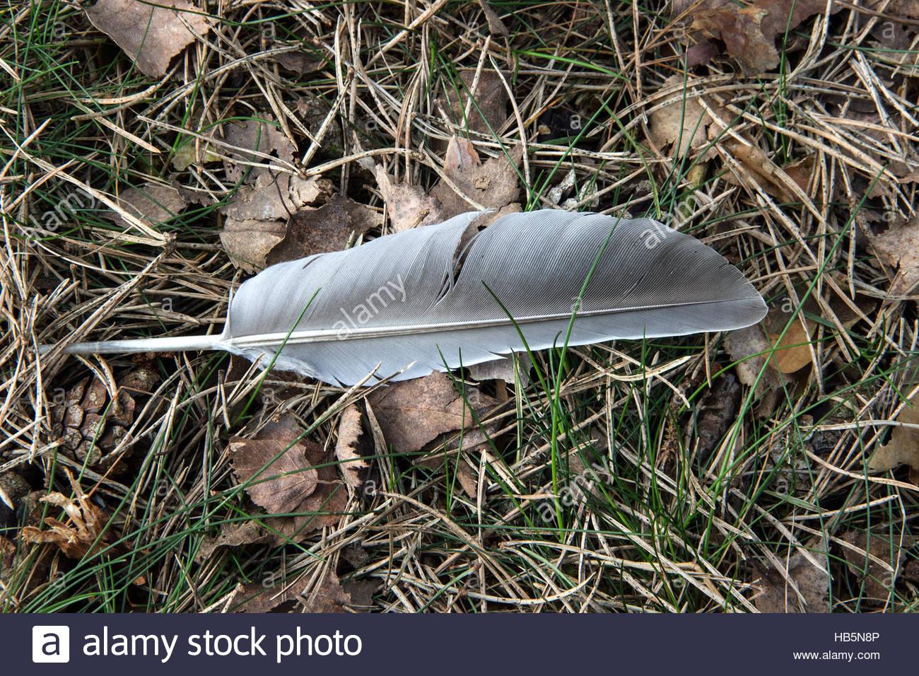 Plume d'oiseau unique Photo Stock