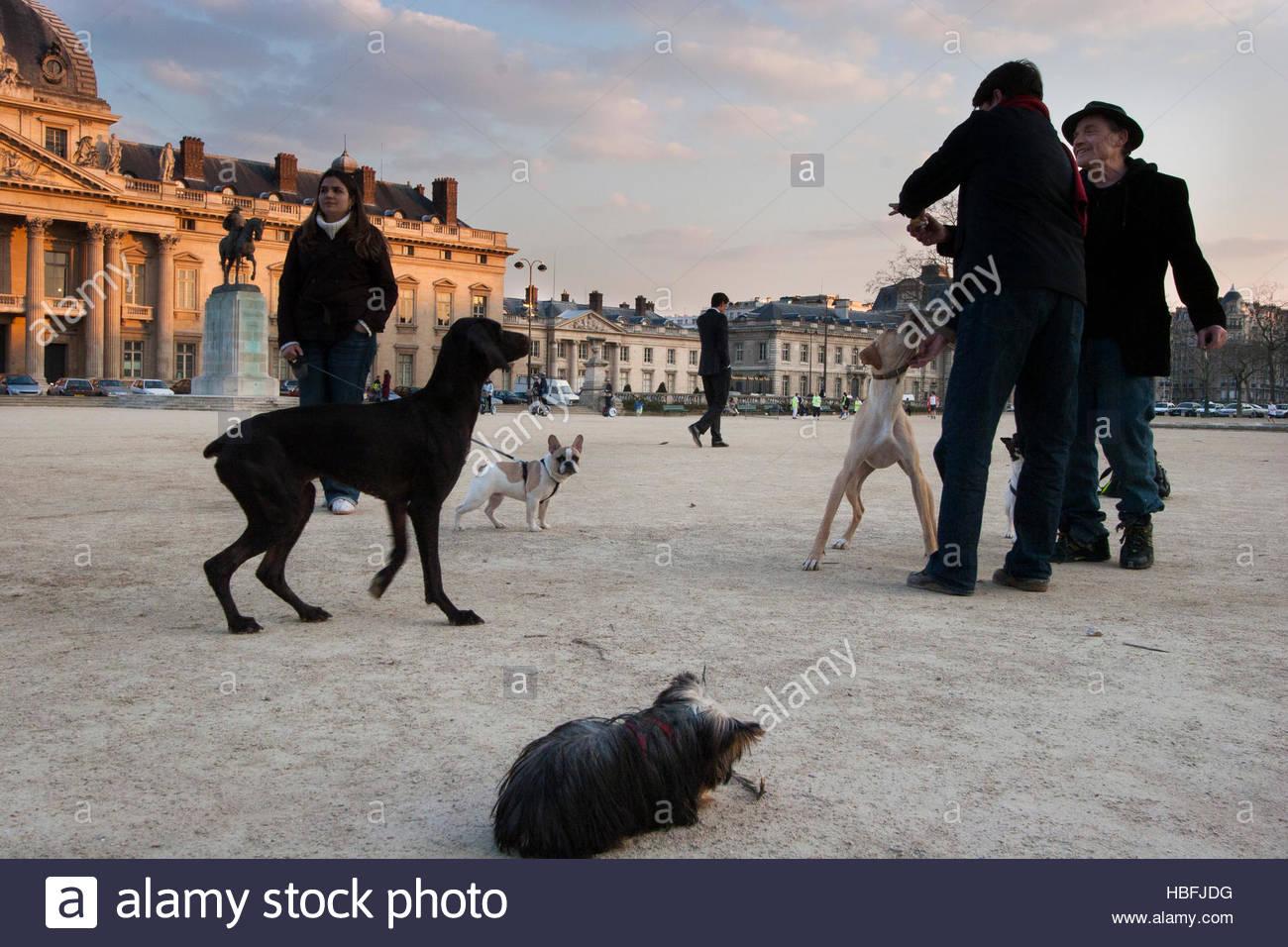Les chiens et leurs propriétaires convergent la plupart des soirées dans le parc du Champ de Mars. Photo Stock