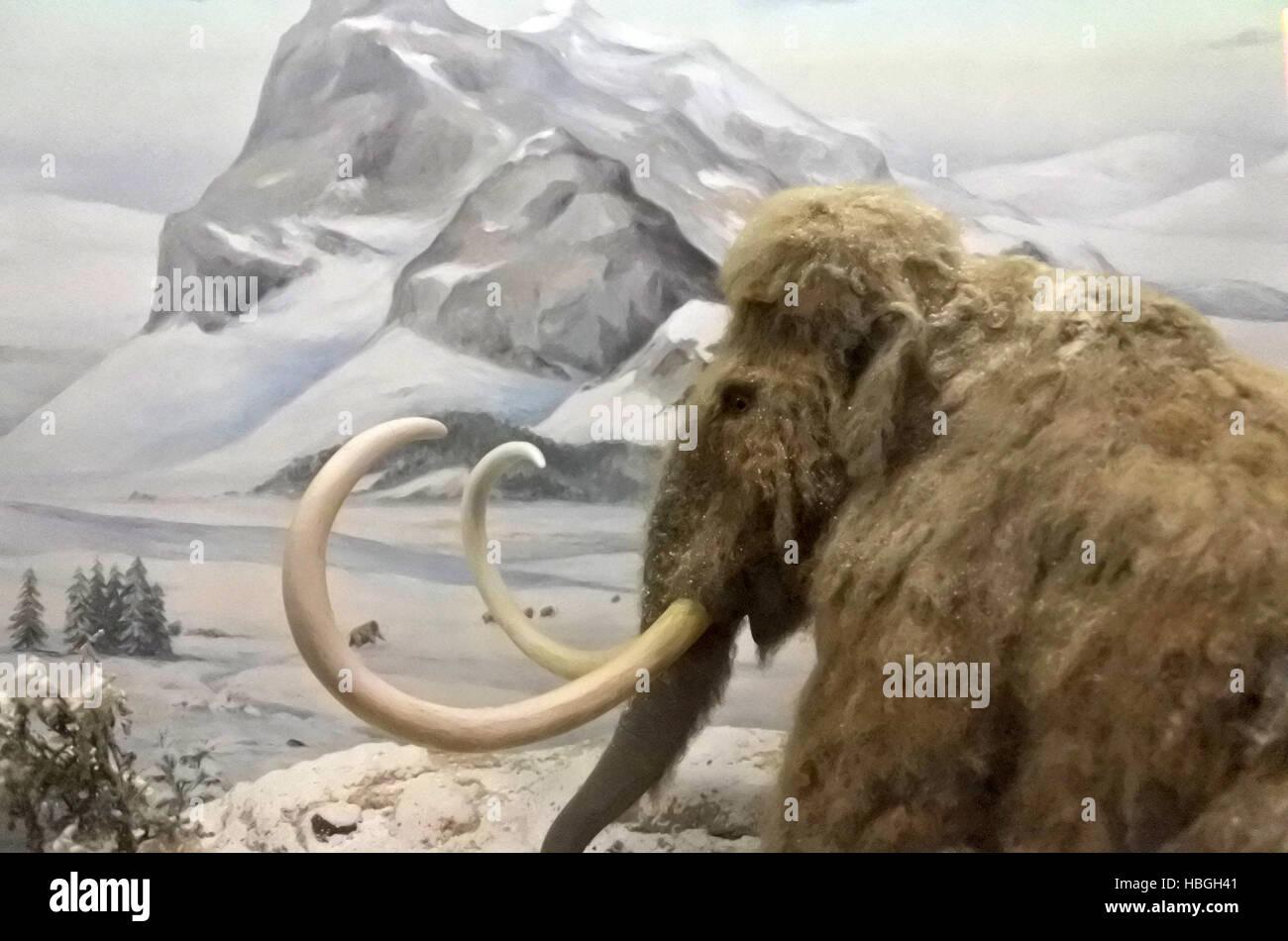 Paysage d'hiver gelé contre mammouth Mammouth.disparue autour de 4500 ans Banque D'Images
