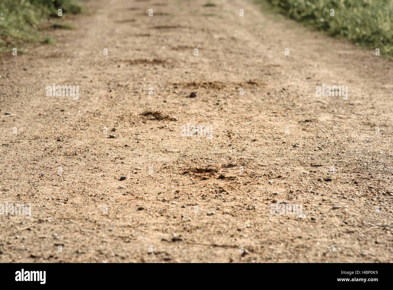 [Jeu] Suite d'images !  - Page 6 Trace-du-sabot-du-cheval-sur-la-route-de-sable-dans-les-bois-hbp0k9