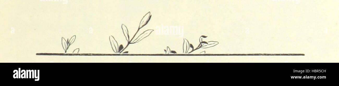 """Image prise à partir de la page 307 de """"Le Silence de Dean Maitland ... Avec illustrations, etc' image Photo Stock"""