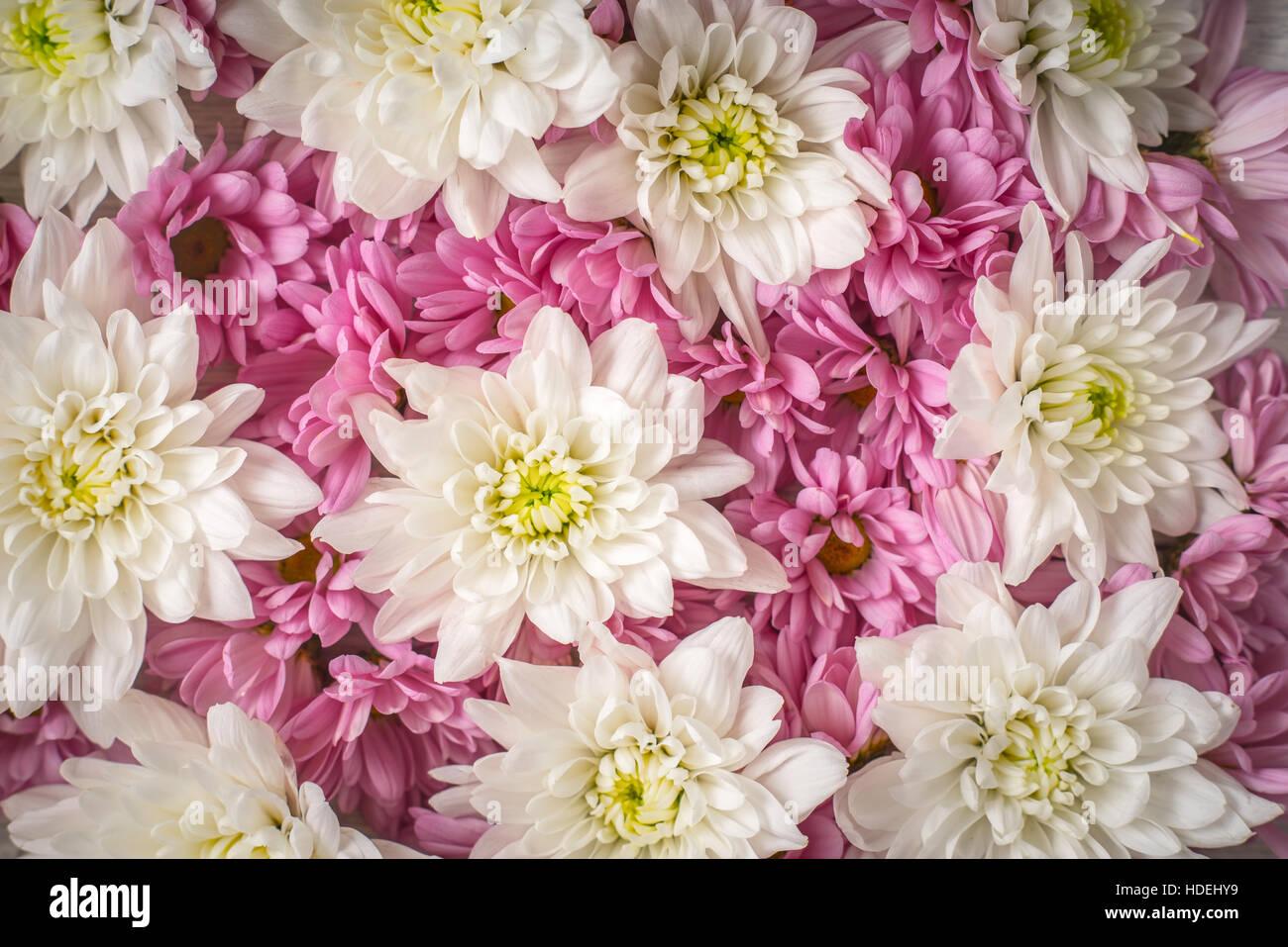 Différentes fleurs nature pétale plante fleur Photo Stock