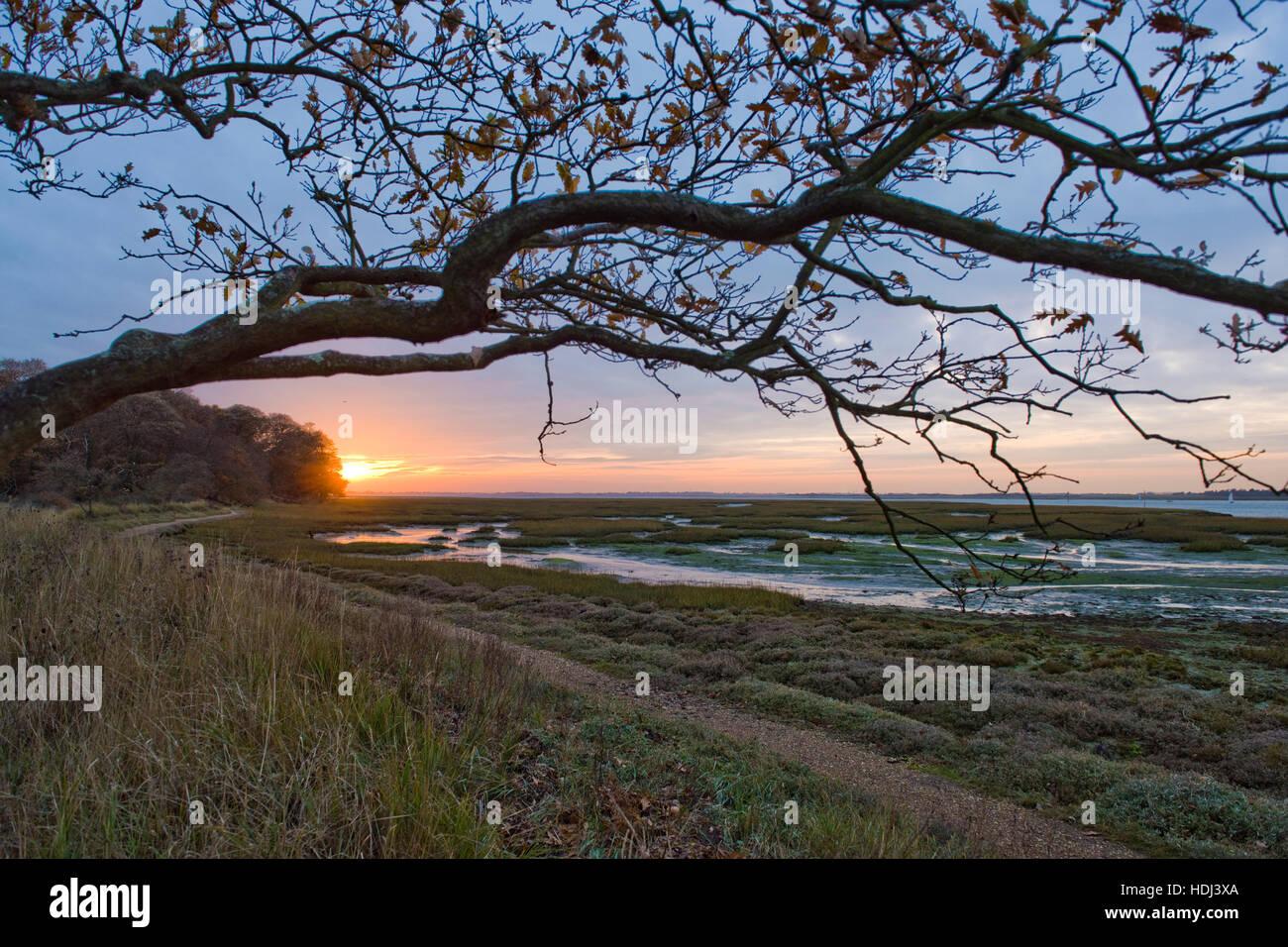 Chichester Channel à marée basse avec un retard de chêne et le coucher de soleil en automne de Itchenor, Photo Stock