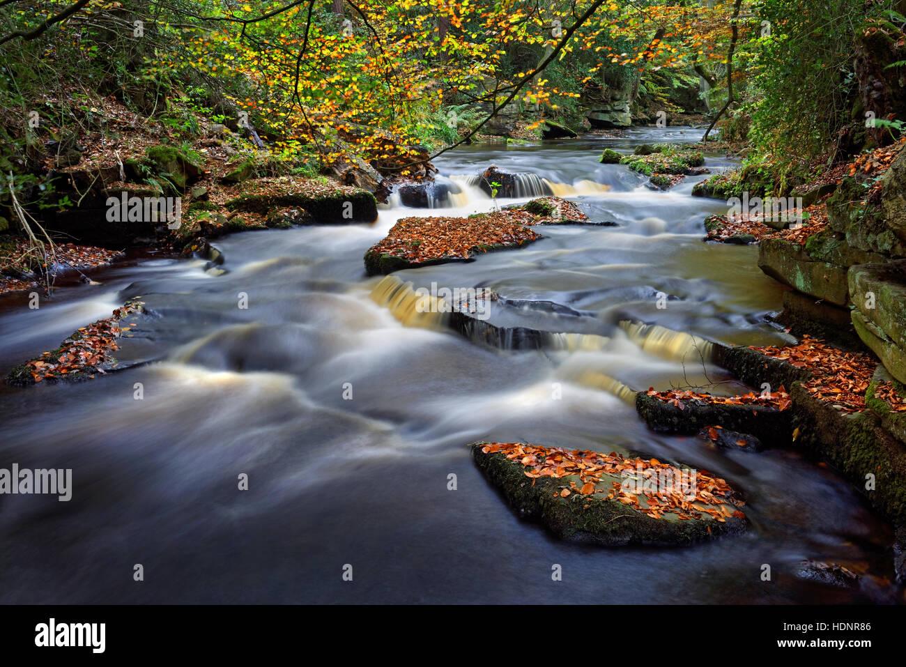 UK,South Yorkshire,Rivière,Sheffield en automne Rivelin Banque D'Images