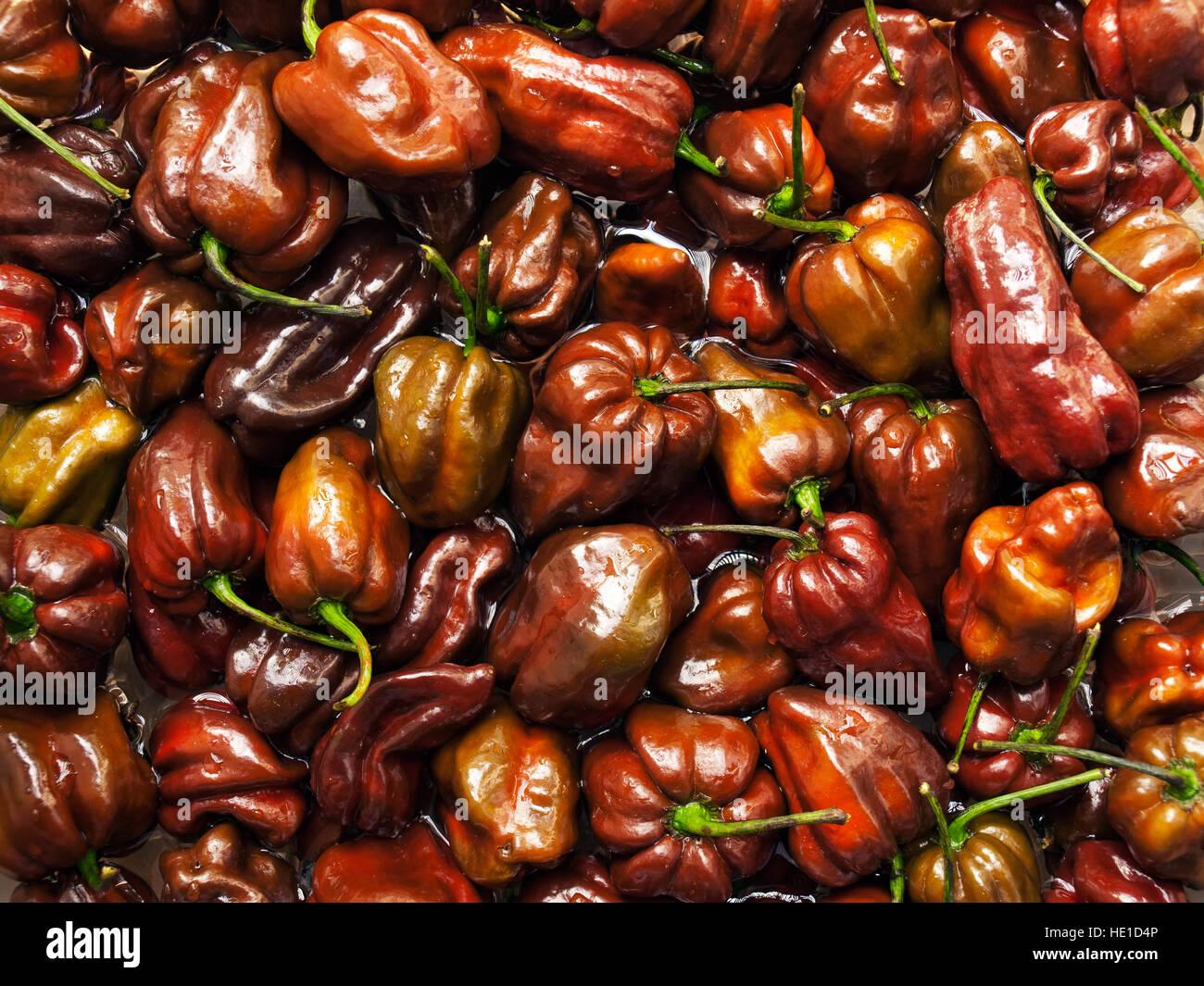 Beaucoup de chocolat Habanero peppers dans l'eau. Photo Stock
