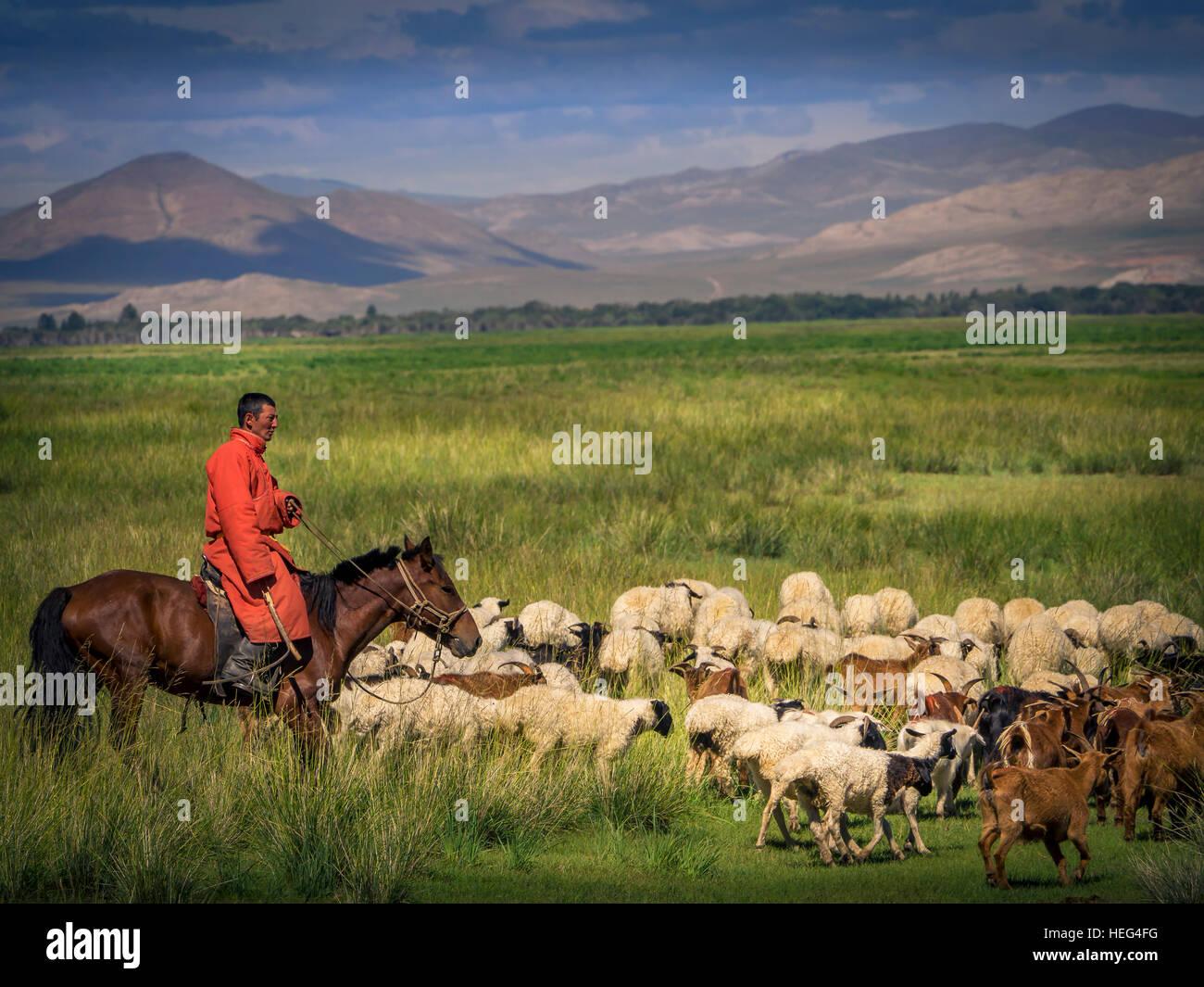 Nomad, cavalier au cheval avec les chèvres et les moutons, la Mongolie Photo Stock