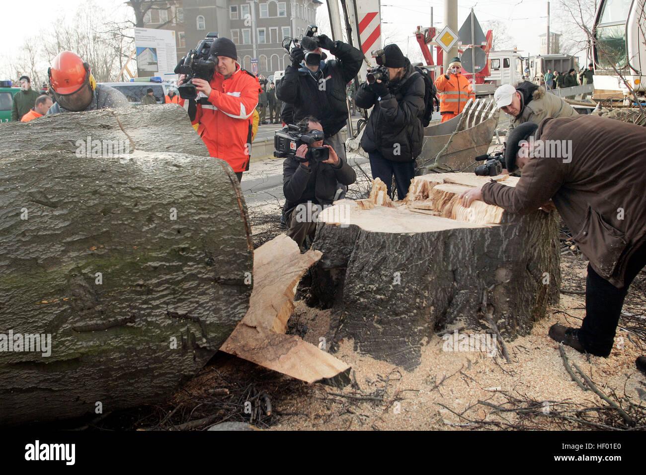 Robin des bois d'activistes de l'environnement ont été supprimées d'un 300-year-old arbre qui a été abattu afin de construire un nouveau pont Banque D'Images