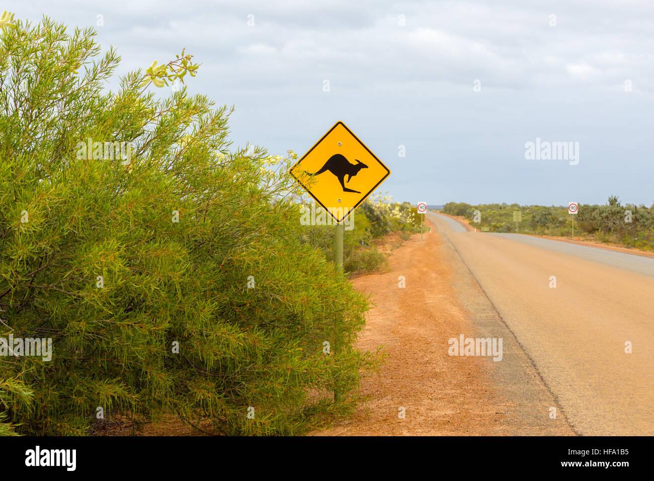 Inscrivez-kangourou, chemin de terre, dans l'ouest de l'Australie Photo Stock