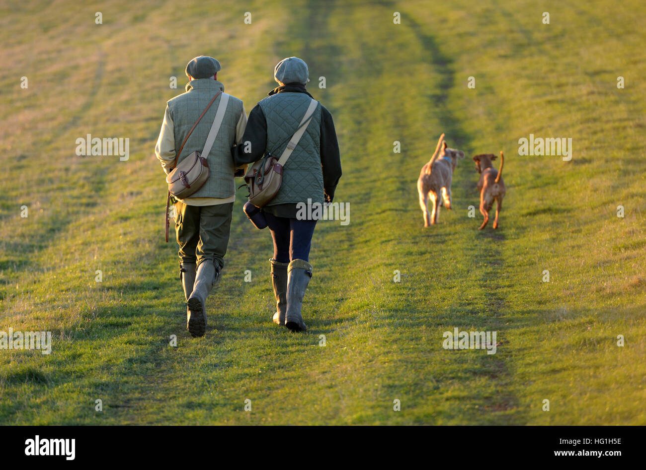 Pays couple walking dogs on the South Downs Way Banque D'Images