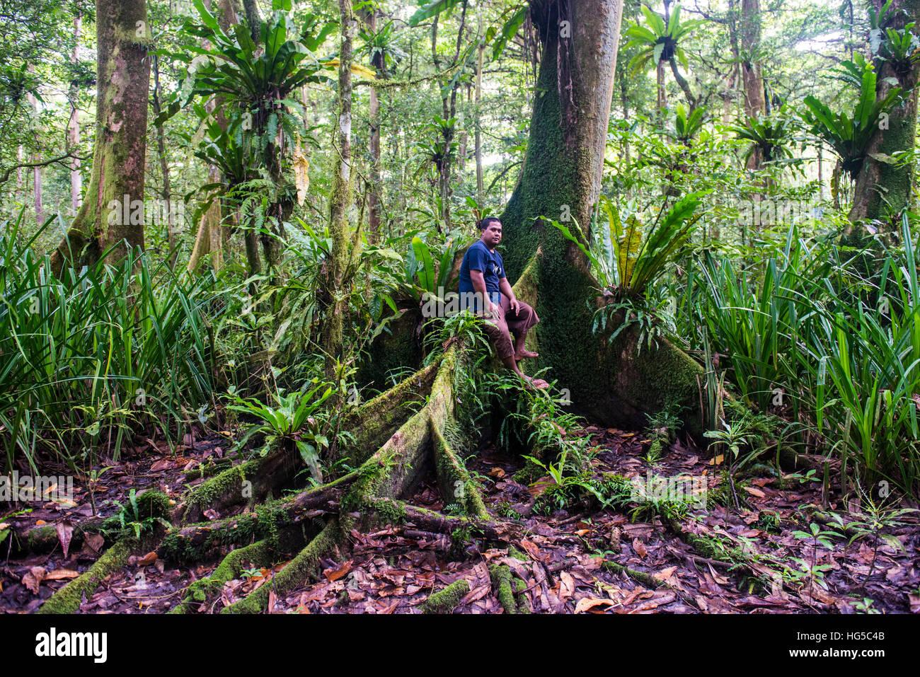 Homme assis dans la forêt de conservation Yela Ka Ka des arbres dans la vallée de Yela, Kosrae (États Photo Stock
