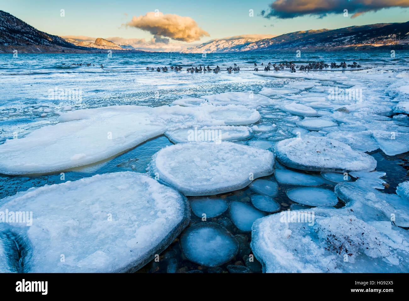 Pancake ice, le lac Okanagan, Penticton, , British Columbia, Canada. Photo Stock