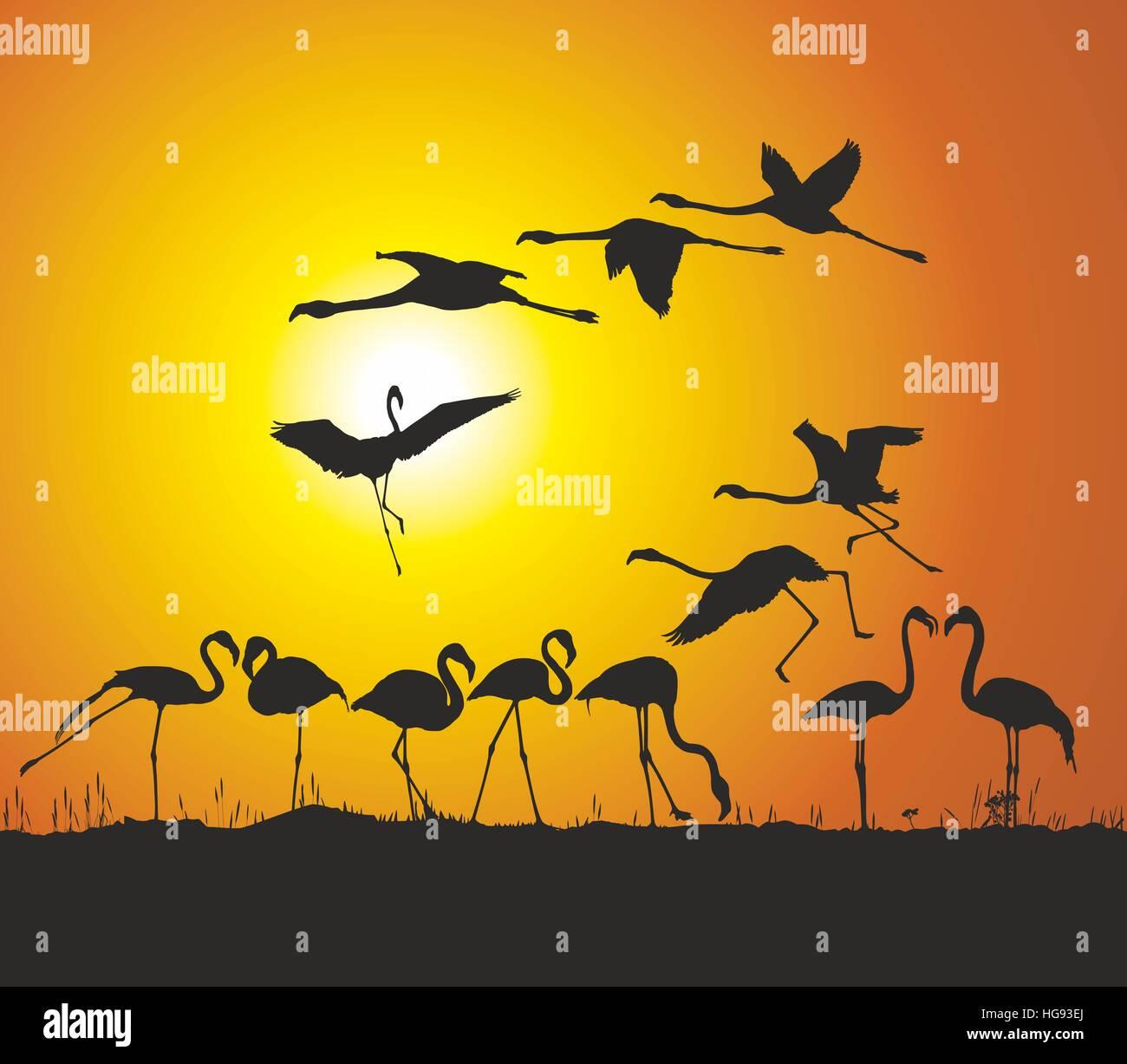 Les flamants roses et le coucher du soleil Photo Stock