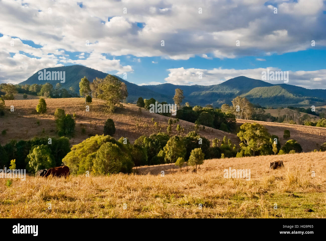 Nimbin, Australie, paysage rural Photo Stock