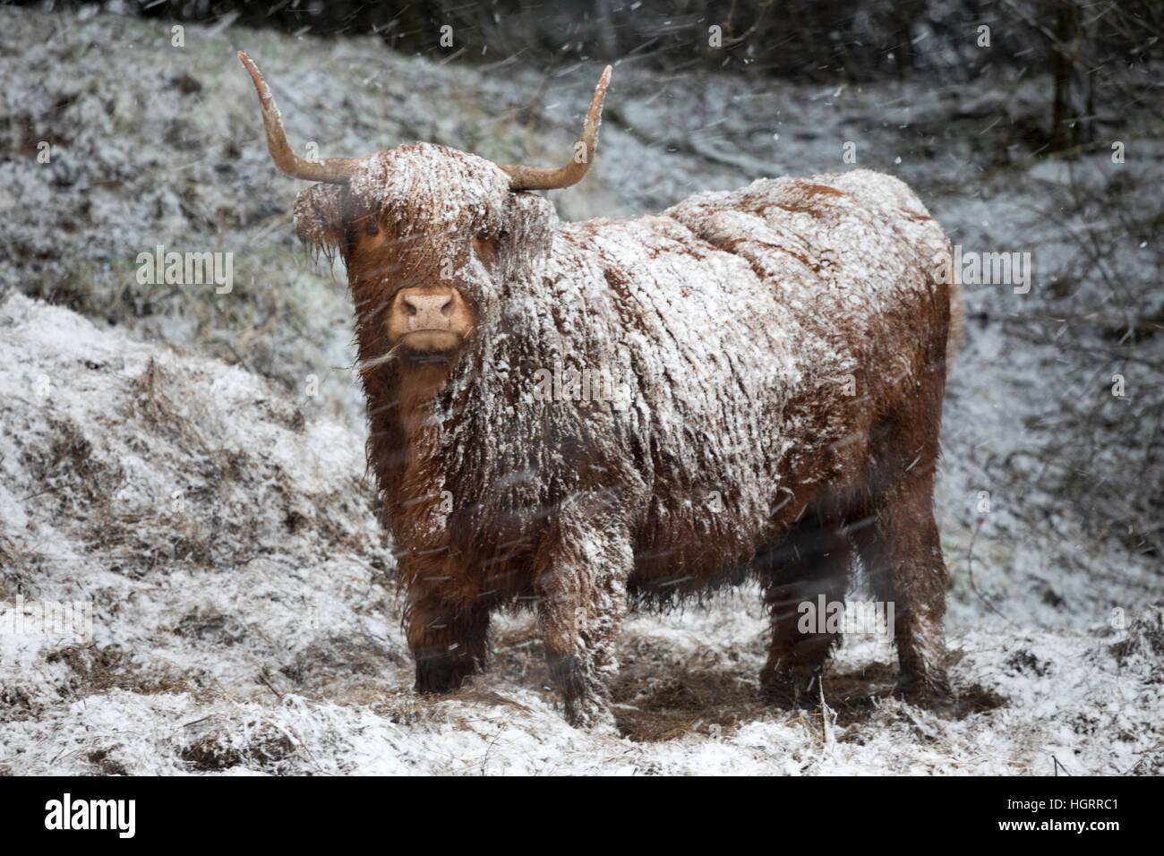 Flintshire, Pays de Galles, Royaume-Uni. 12 Jan, 2017. Pour la neige jaune d'avertissement émis pour le Photo Stock