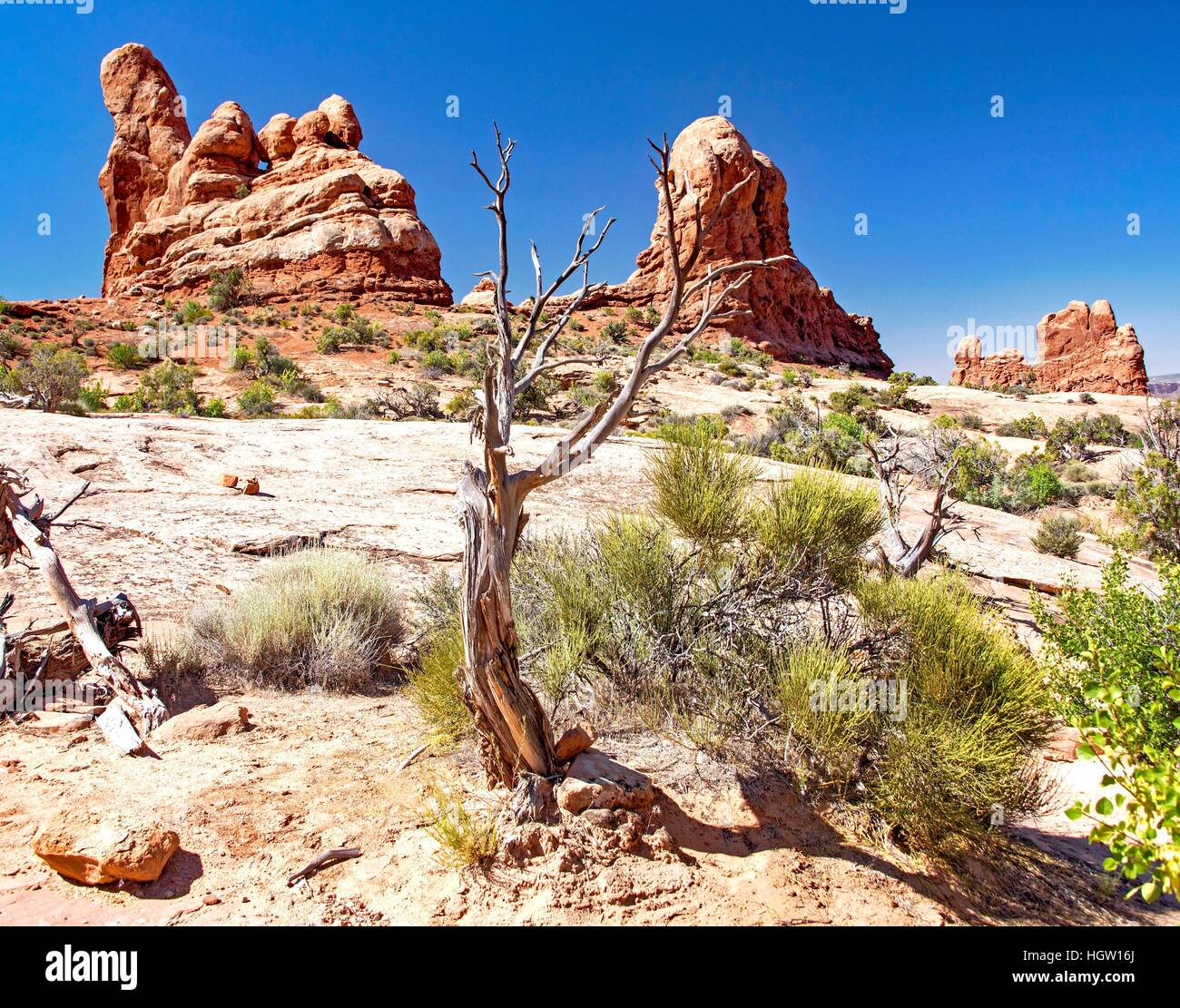 L'Écosystème High Desert, Arches National Park, Moab, Utah Photo Stock