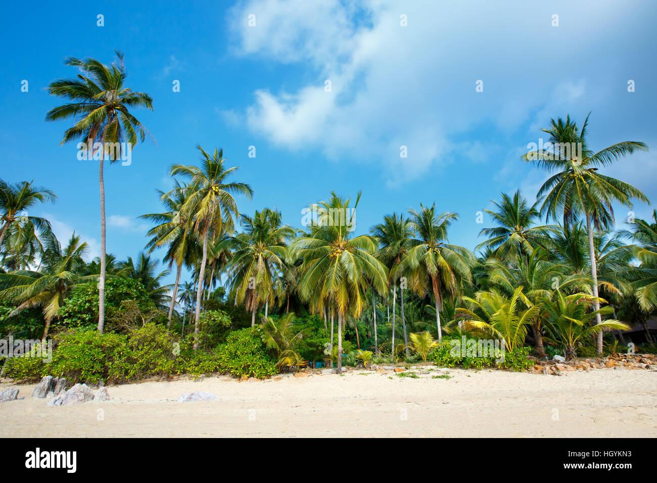 Plage tropicale et de cocotiers à Koh Samui, Thaïlande Photo Stock