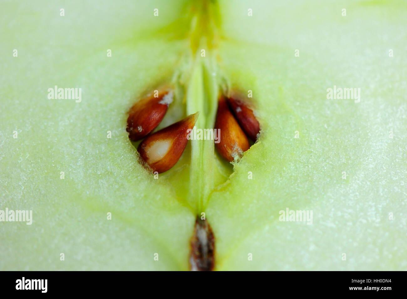 Close up de pomme verte avec des graines Photo Stock