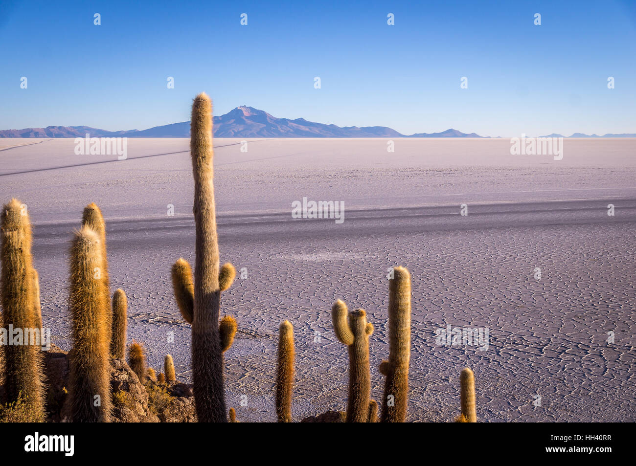 Vue depuis l'Isla Incahuasi, Uyuni, Bolivie Photo Stock