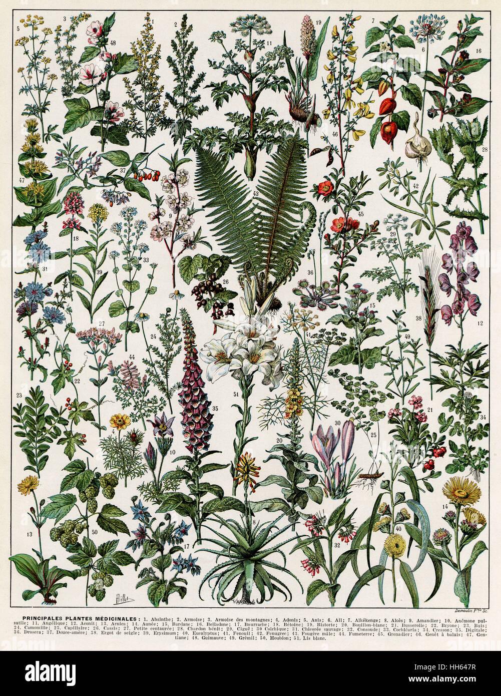 Une variété de plantes médicinales notamment digitales, fougères, crocus et physallis. Photo Stock