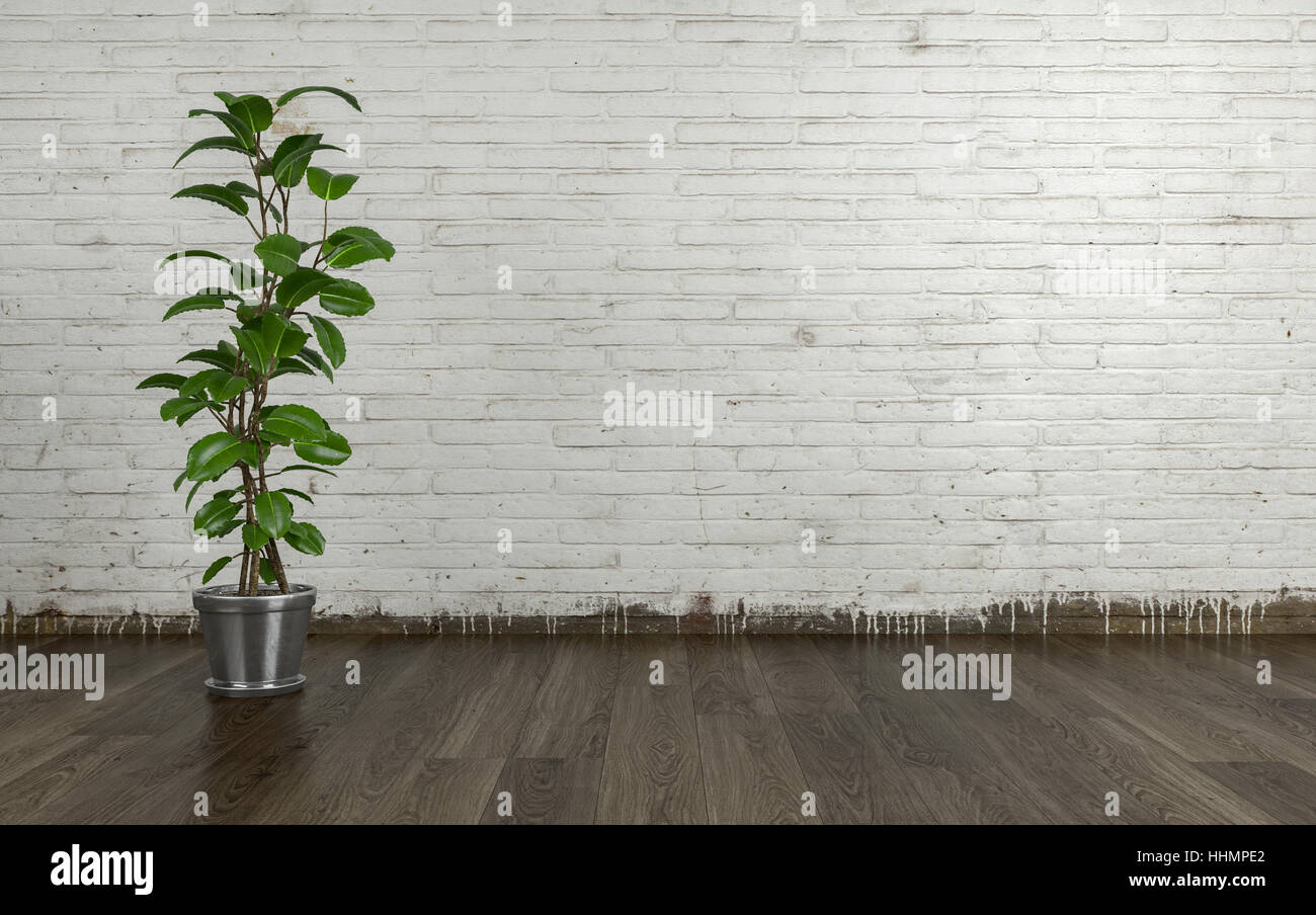 Feuille Stratifié Blanc Brillant plante d'intérieur avec des feuilles vertes en forme de