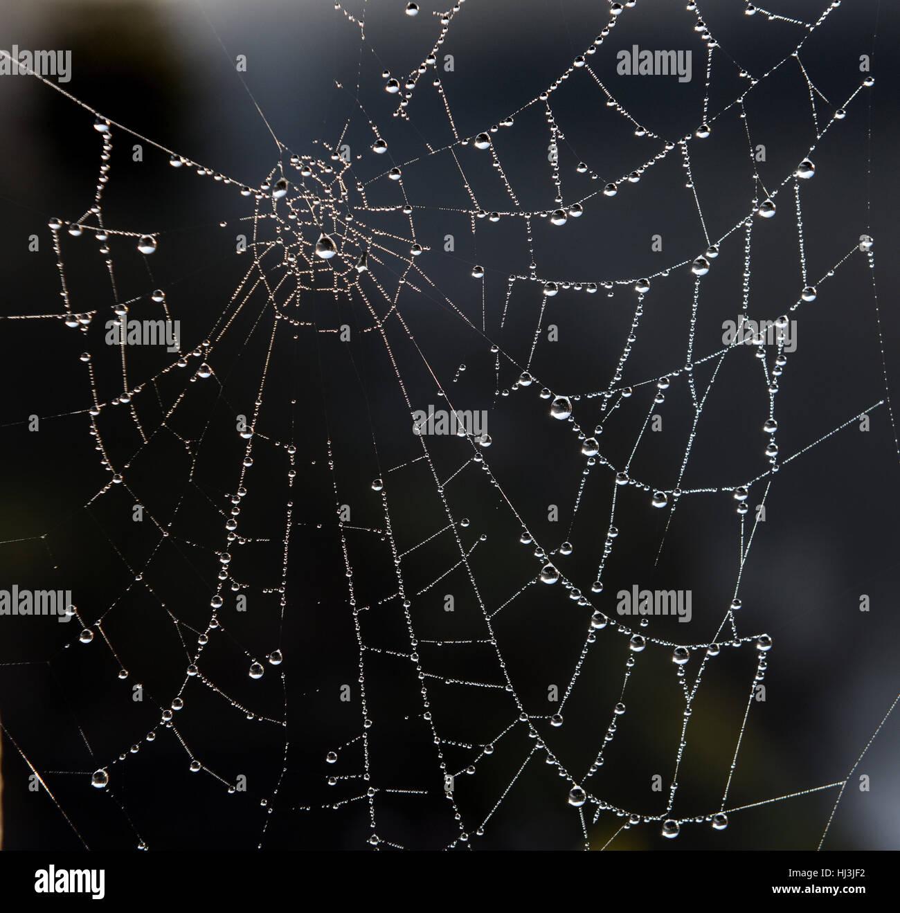 Les gouttelettes d'eau sur les araignées site web Photo Stock