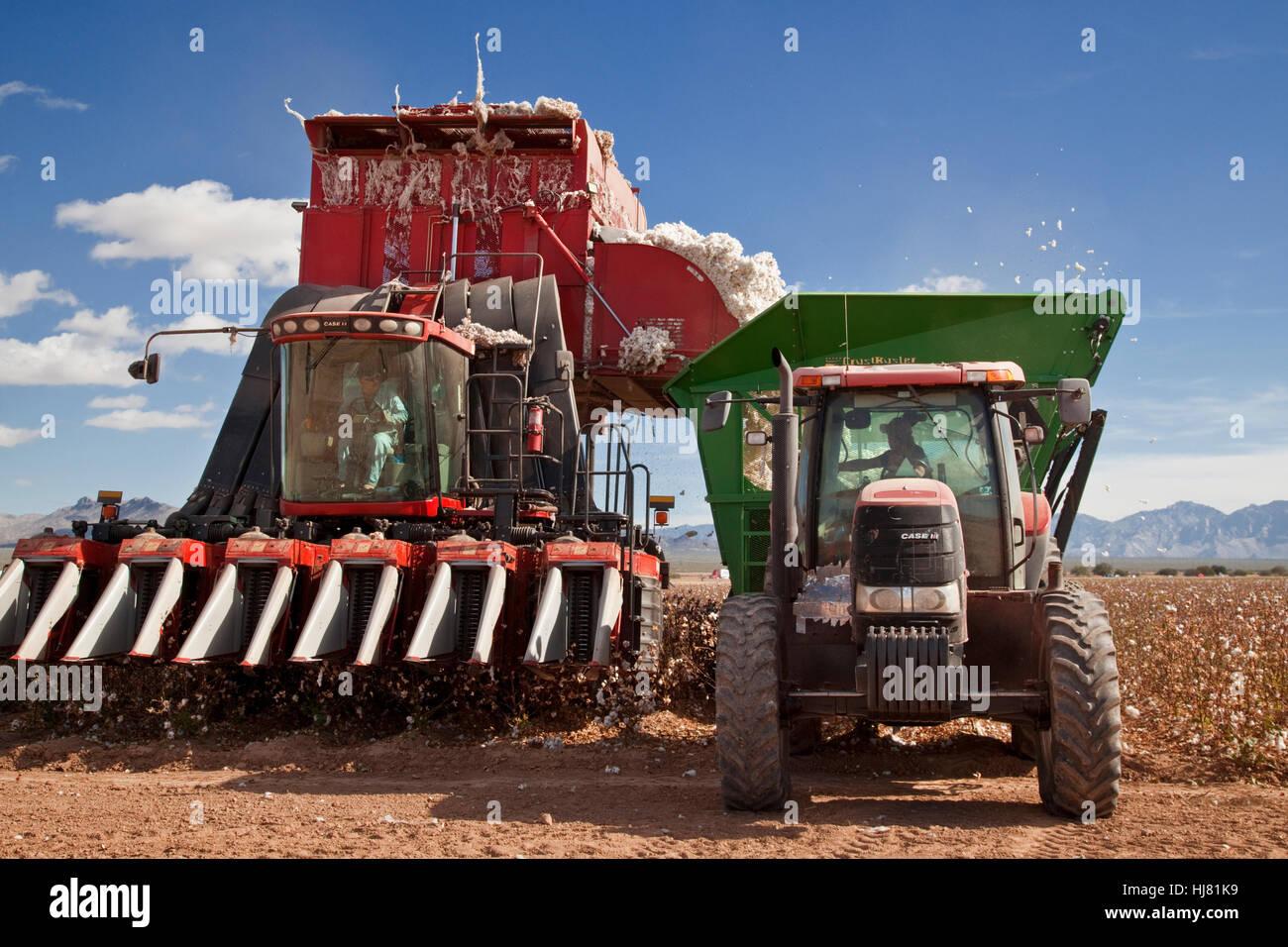 La récolte de la moissonneuse-batteuse de coton- Agriculture - Marana, Arizona Photo Stock
