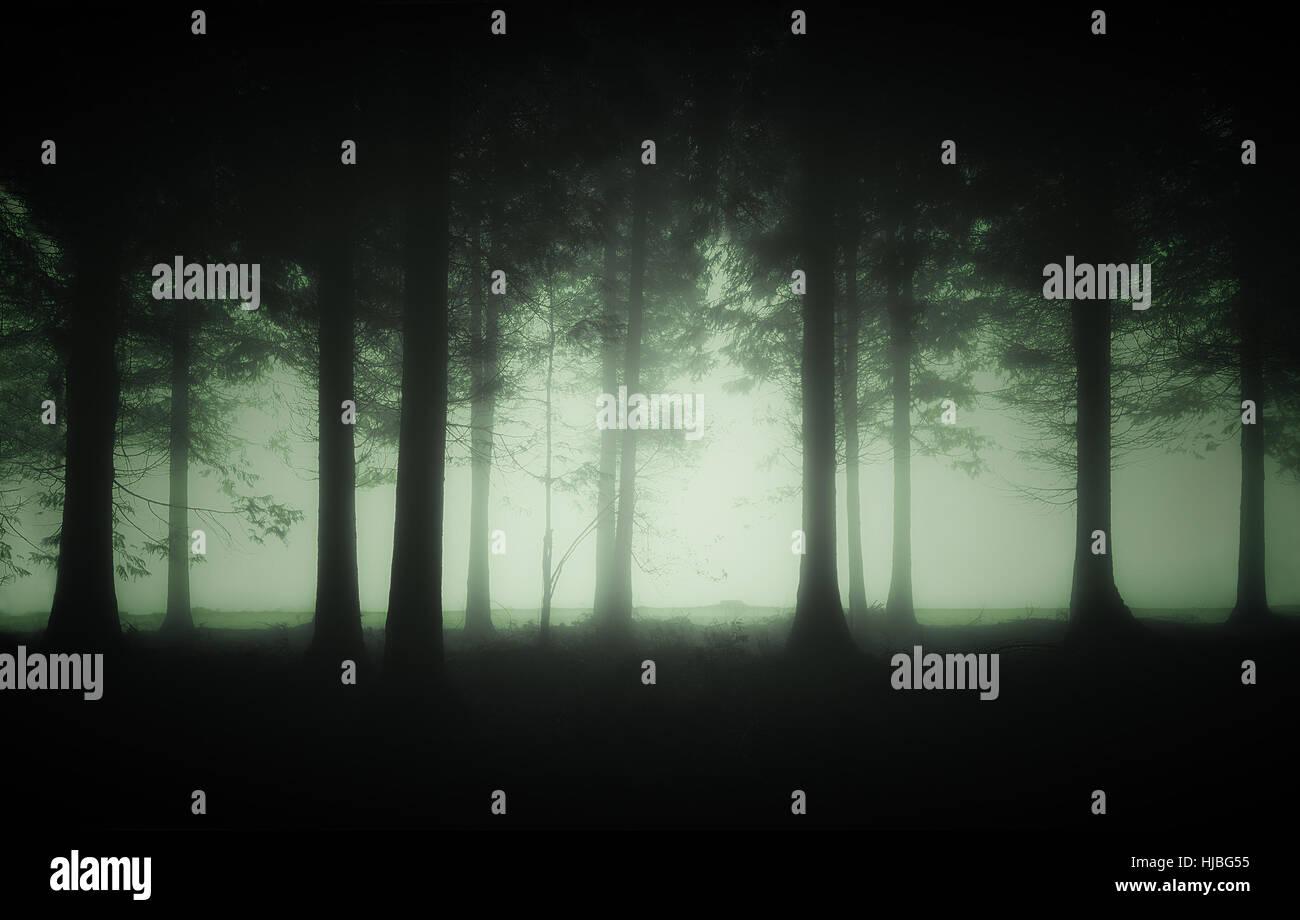 La forêt sombre et lugubre dans le brouillard Photo Stock